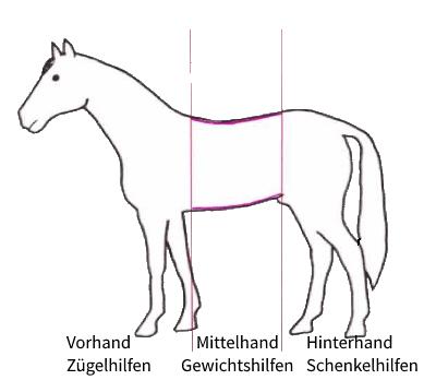 Unterteilung des Pferdes für die einzelnen Hilfen